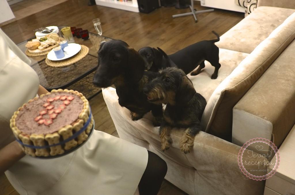 Šuniukai labai nori torto